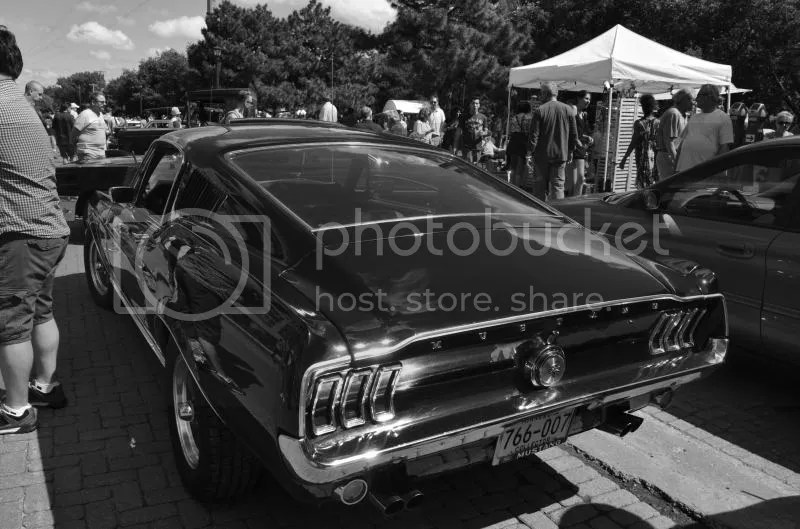 Mustang Savvy