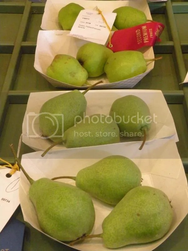Two Pairs of Pears