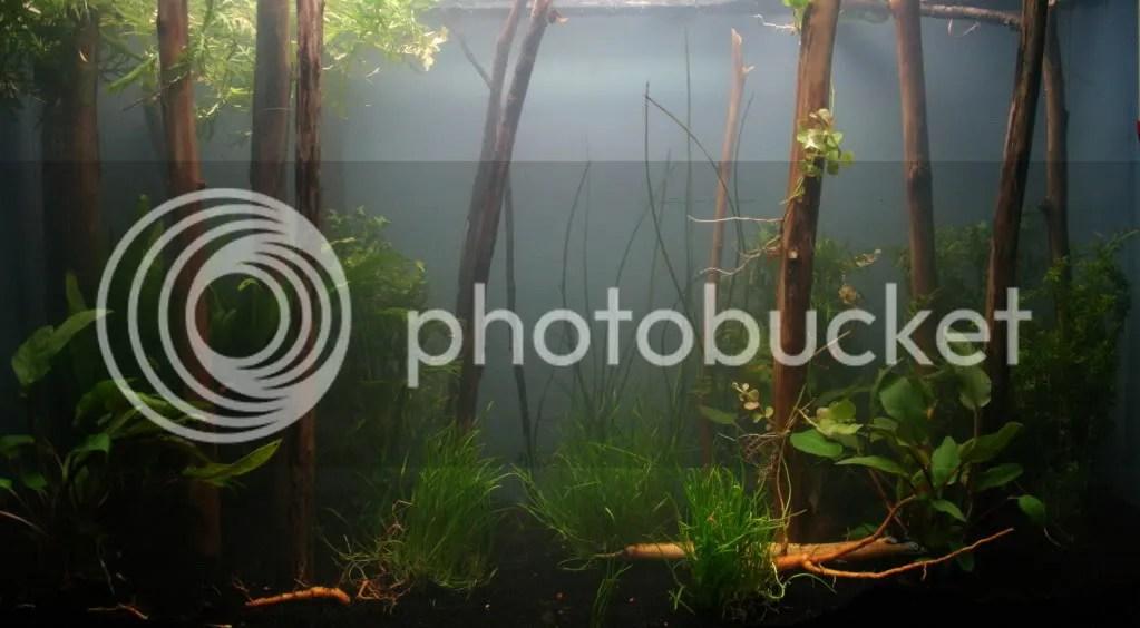Amazon Frogbit Care