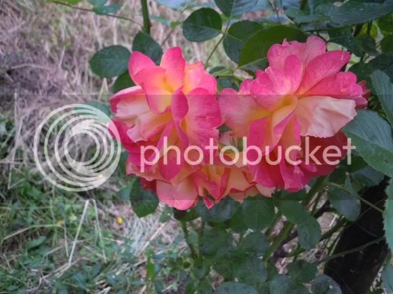 photo DSCN9831.jpg