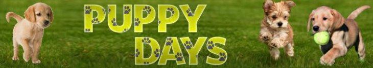 Puppy.Days.S01E05.Growing.Pains.720p.WEB-DL.DD5.1.H.264-NTb  - h264 / 720p / Web-DL
