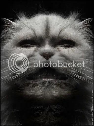 Gatos y Piopio