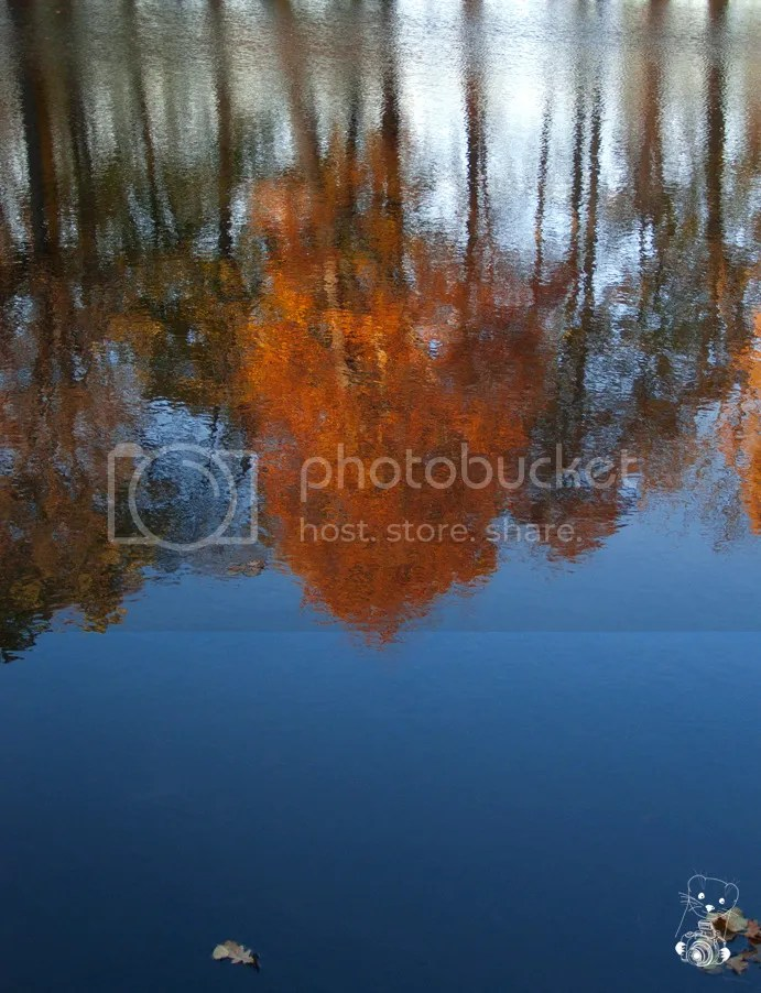 Reflection of threes with red foliage, in the lake at Naunhof in Saxony, Germany, November 2014: By Robby das Wiesel