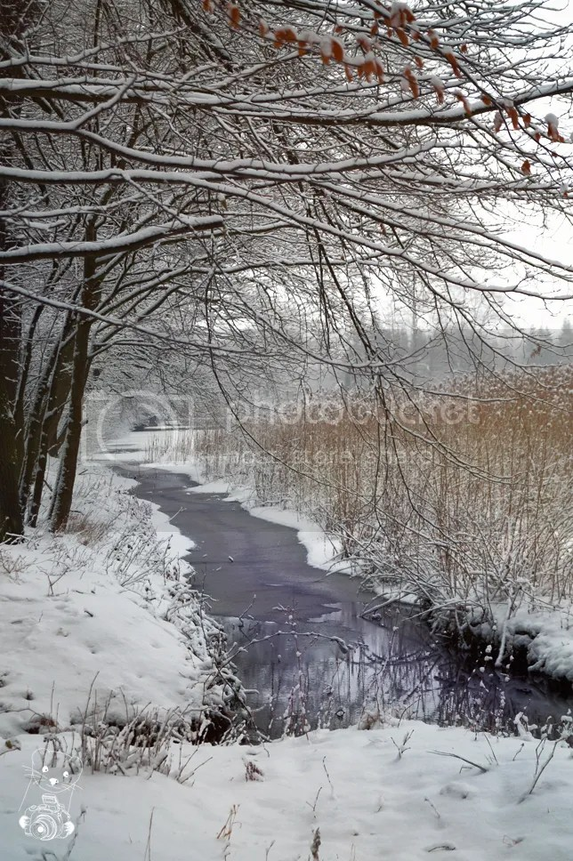 The shore of the frozen lake in the park at the Hermsdorf castle in Saxony, Germany