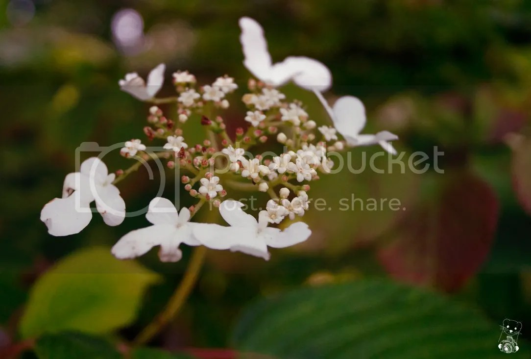 White flowers in a bush in the Park Naunhof in Saxony, Germany