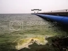 Polluted Taihu Lake, 2