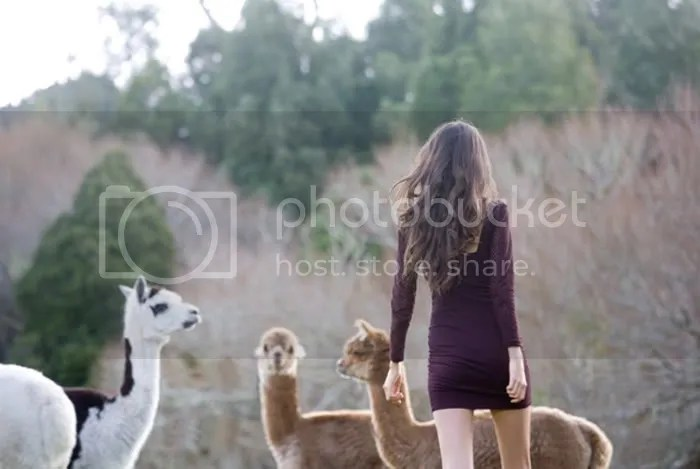animals,field,velvet