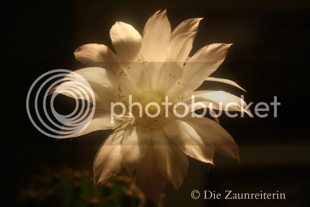photo 00ddb656-035a-457d-97eb-bb38b5c31bf0_zpsuulrpzju.jpg