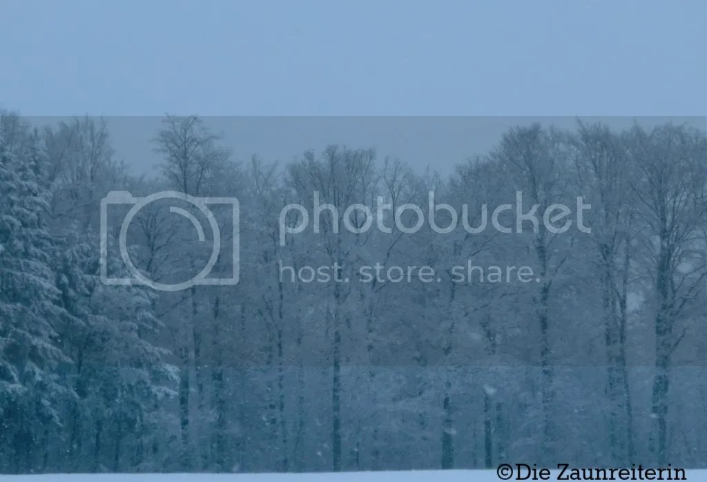 photo 41f8f5ad-6a61-454c-b6f4-4e98ff1c6fb7_zpsbpr42uqg.jpg