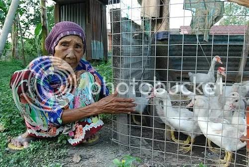 nenek dengan itik