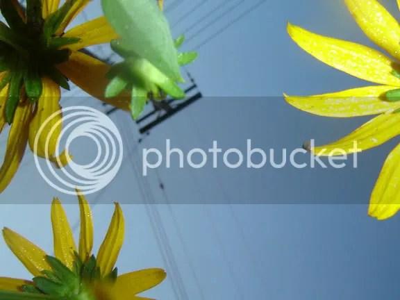 Original digital photography by DaveX