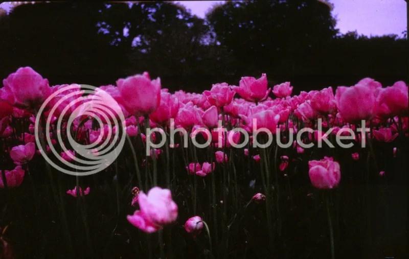 photo IMG_0009.jpg