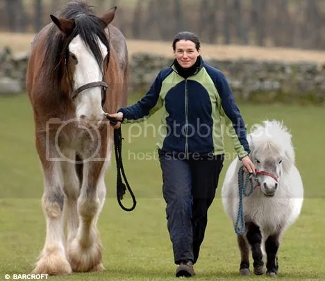 Horse and a pony, picture by dailymail.co.uk