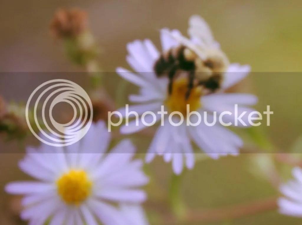 photo 68e36442-4d26-438c-920f-8c1b99d0805f.jpg