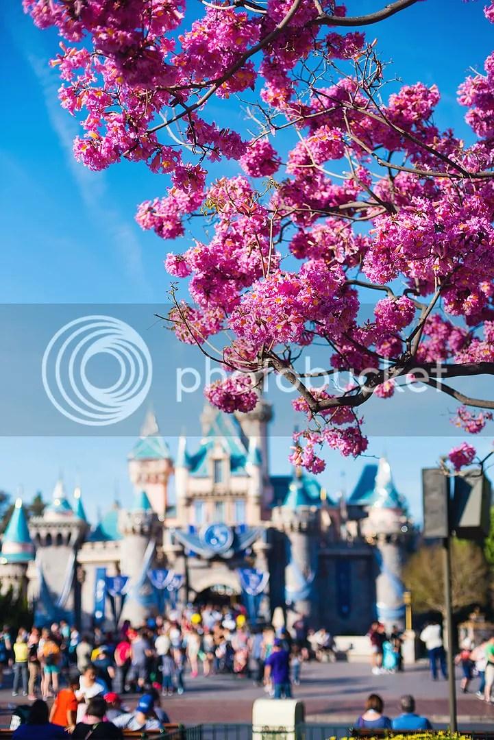 photo DisneylandKSimmons_33_zps107lcomc.jpg