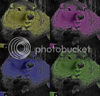 Warhol's Groundhog