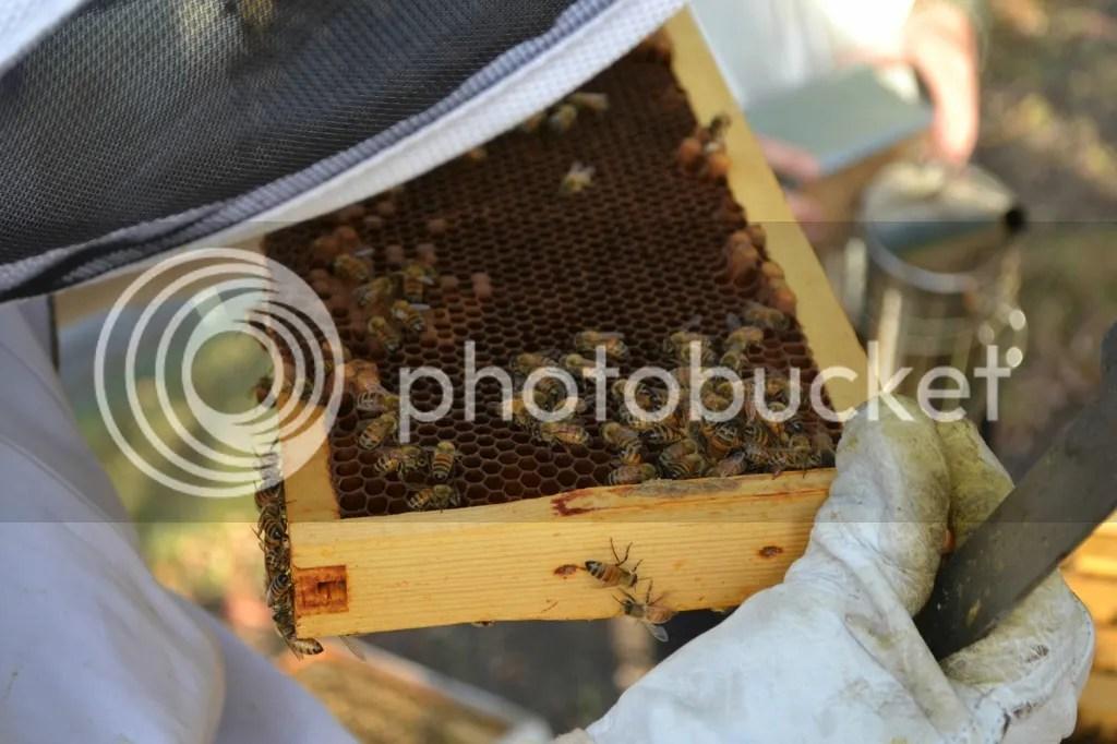 photo Bees20_zpscktwbss9.jpg