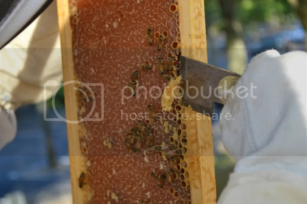 photo Bees2_zps6o3zidt8.jpg