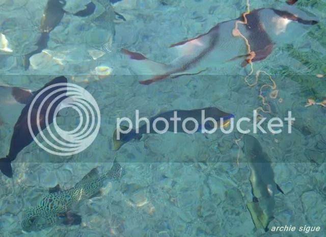 Juag Lagoon Marine Sanctuary Matnog Sorsogon