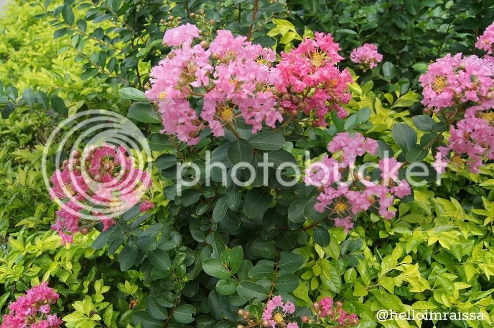 photo 9665838a-1284-41e2-bd18-2ba253d93a13_zps2170a399.jpg