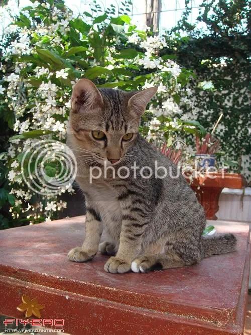 น้องแมว, เจ้าเสือ, ซุกซน