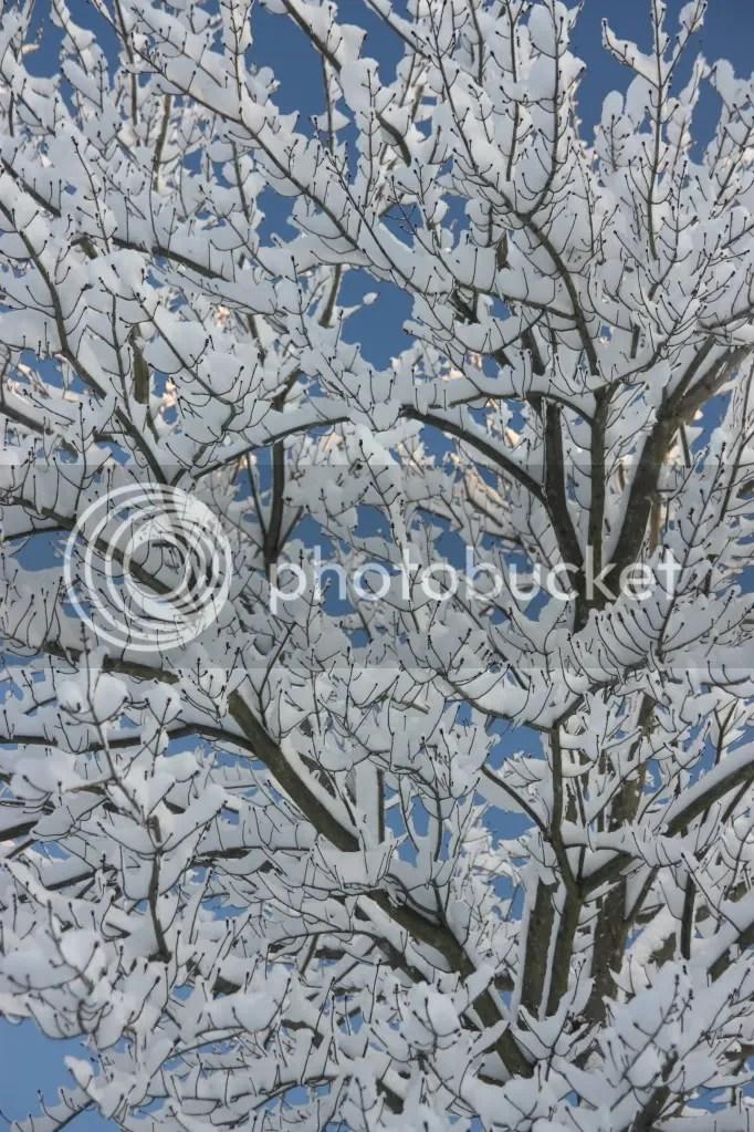 photo snow10.jpg