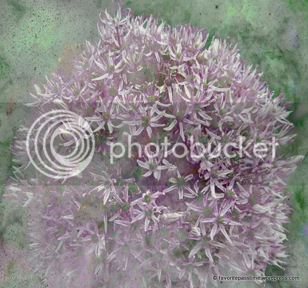 Texture Violet Alliun