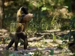 Monkey Using Tools