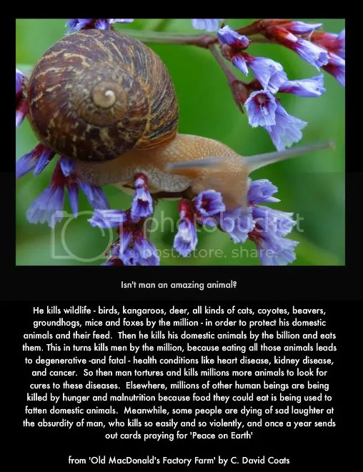 C David Coats quote of factory farms, with snail and flower