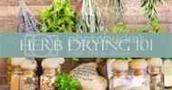 Country Mouse City Spouse: Herb Drying 101
