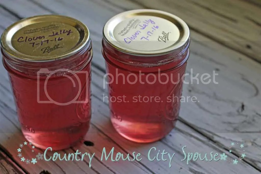 Homemade Pink Clover Jelly- Country Mouse City Spouse