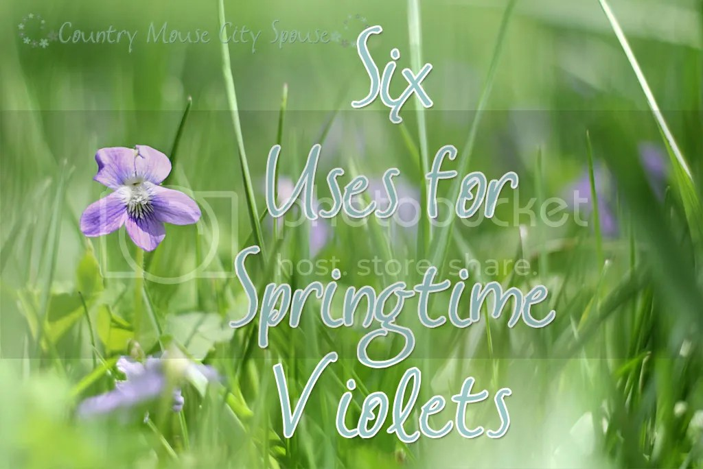 Six Uses for Springtime Violets- Country Mouse City Spouse