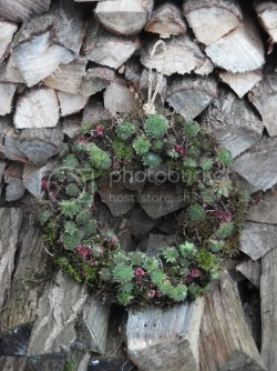 DIY Succulent Wreath Tutorial @ A Happy Home in Holland