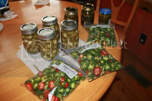 table full of jalapeno's in freezer bags, canned and candied