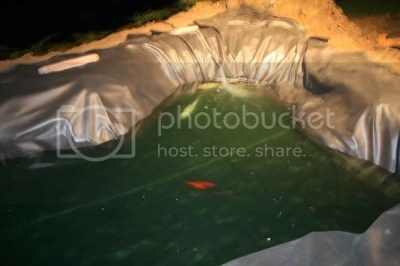 new koi pond with fish