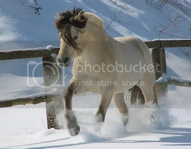 free horse pictures photo: German Horse in Snow Hermanto120-20Germany.jpg