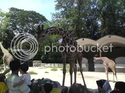 zirafah zoo negara