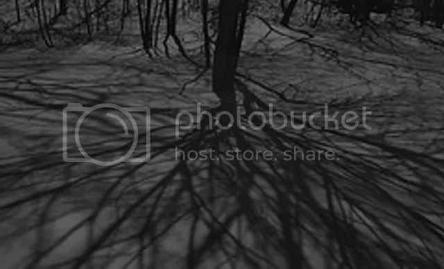 TREEshdw1_640x photo TREEshadows_640X_8494342760_b63a3d2ab2_m.jpg
