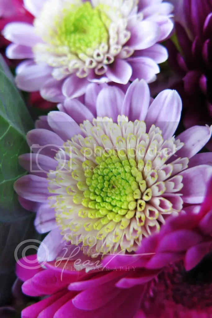 photo 4x6 IMG_3450wm_zpslgshiib1.jpg