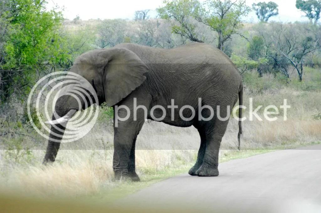elephant consortium south africa