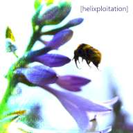 Static Noise Bird - [helixploitation]