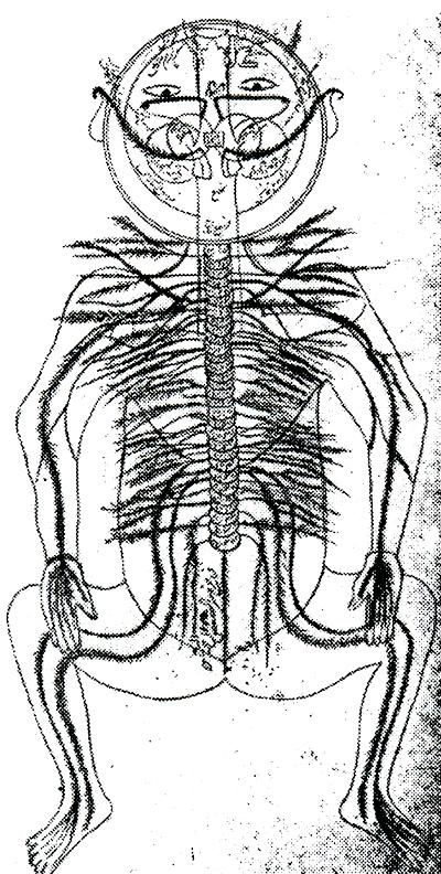 Anatómiai metszet Avicenna Kánon-jából. Wellcome Múzeum, London -- Az emberiség története, 4. kötet (spanyol nyelvű kiadvány)