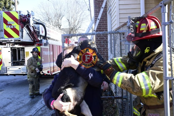 Goats, Dogs & Birds Rescued on Highland Avenue – IAFF Local #2045