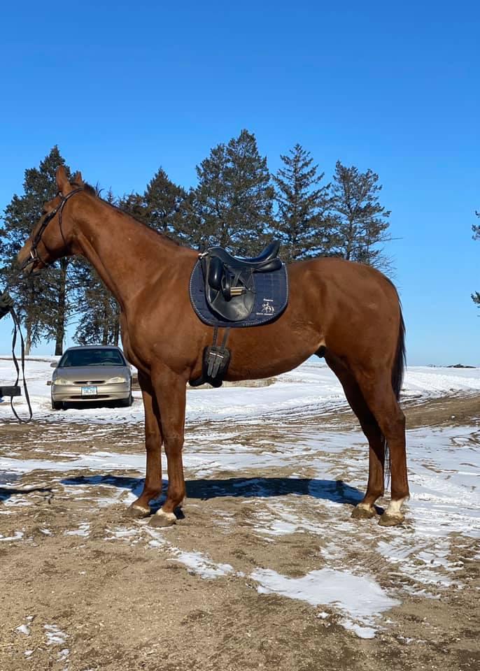Sweet Platinum dressage saddle 1