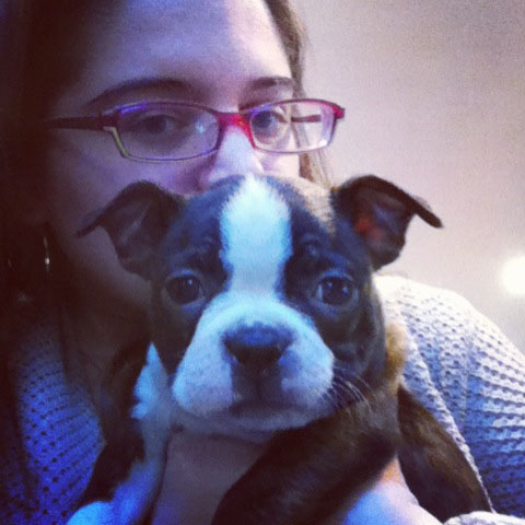 boston terrier_16