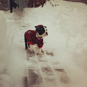kemper in the snow
