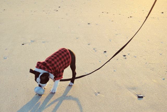 Kemper at the Beach_02