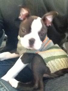 kemper in new coat