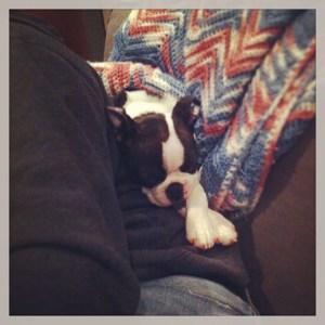 kemper sleeping squish