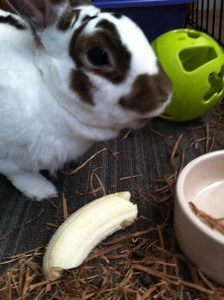 Jack eating a banana